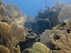 Faraglionee 240x180 Love Bubble Social Diving - Nosy Tanikeli.jpg