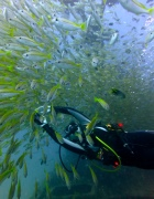 Mitsio Wreck - 140x180 - Diver into School of Fishes - Love Bubble Social Diving.jpg