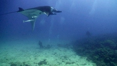 Sub con Manta Gigante - Love Bubble Social Diving - 240x135 Nosy Be.jpg