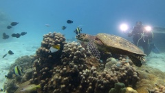 Underwater Operator with Turtle - Love Bubble Social Diving - 240x135 Nosy Tanikeli.jpg