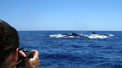 Whale Watching - Love Bubble Social Diving - 240x135 Nosy Be.jpg